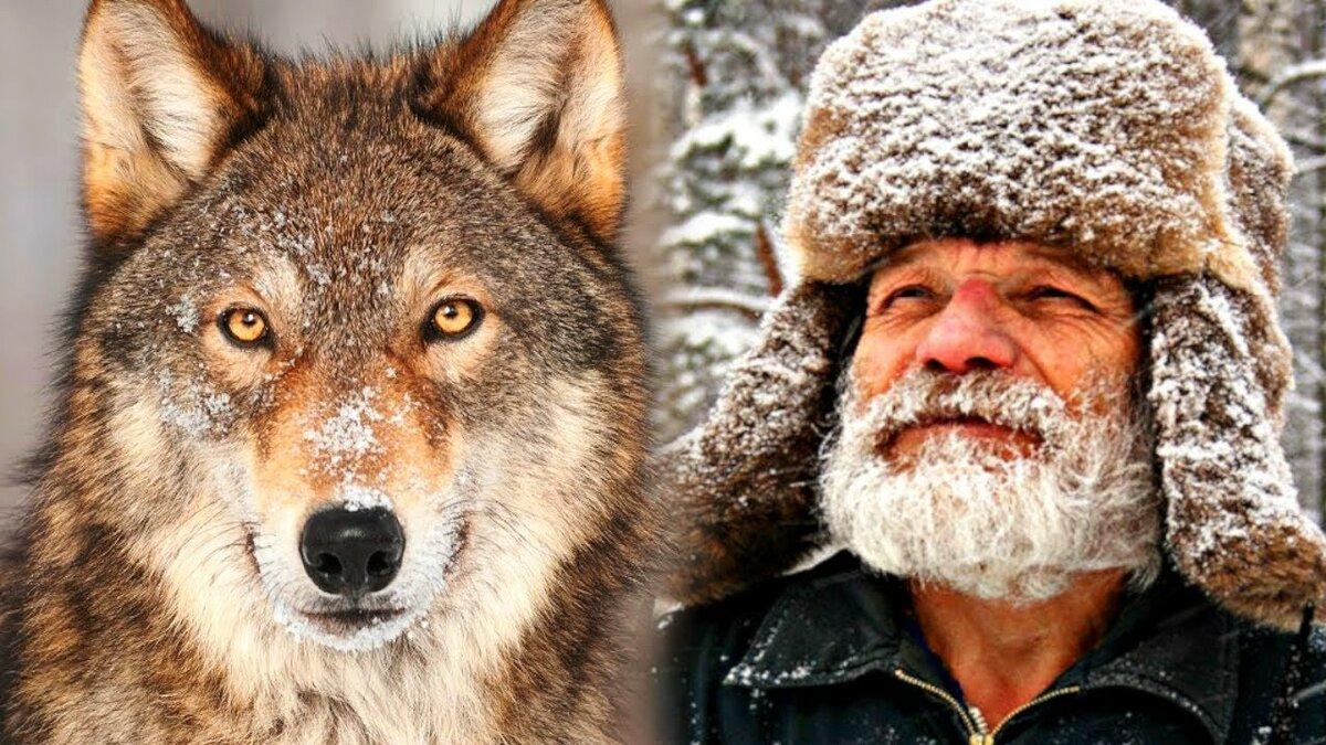 В последние минуты дед вспомнил про волка: Как старик, спасаясь от огня, звал на помощь «Серого»?