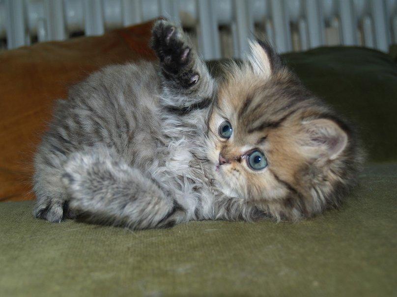 Видео про котят