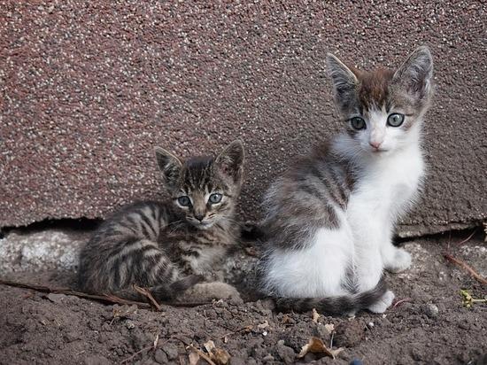 Неминуемая смерть: непроданных котят торговцы «Садовода» выбрасывают в лес