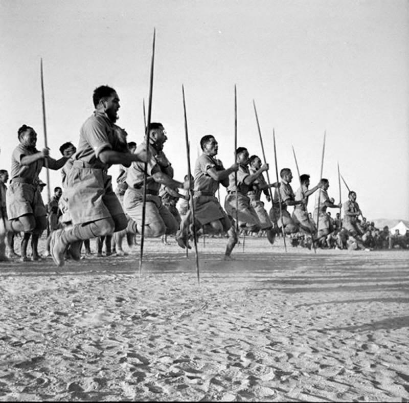 Новозеландцы во Второй мировой войне. От Эль-Аламейна до Триеста