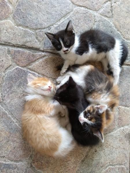 Бродячая кошка подружилась с…