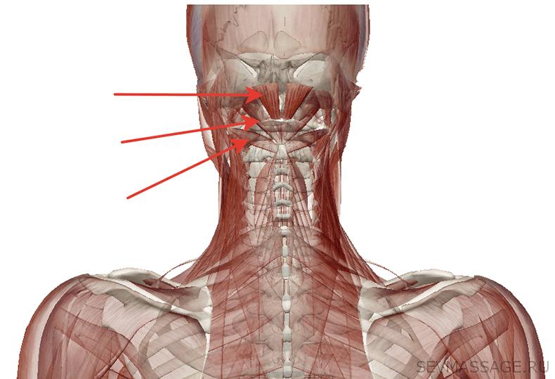 Сосудистая гимнастика: Спасительное средство при гипертонии и головных болях