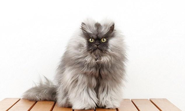 Знаменитые коты мира