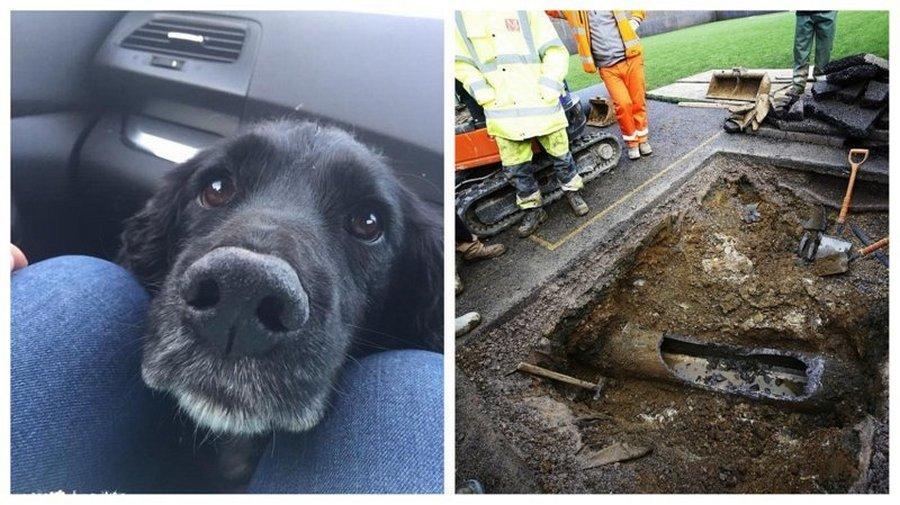 Три дня спасательные службы в Великобритании боролись за жизнь пса