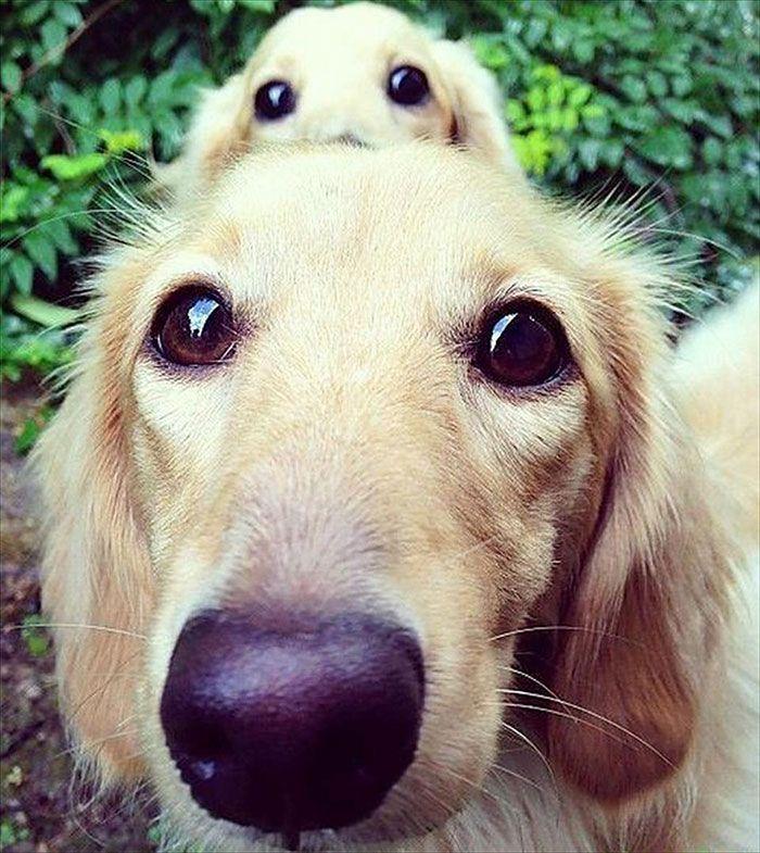 Взрослые собаки и их милые у…