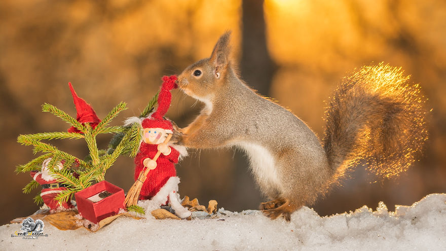 Белочки, которые создают рождественское настроение