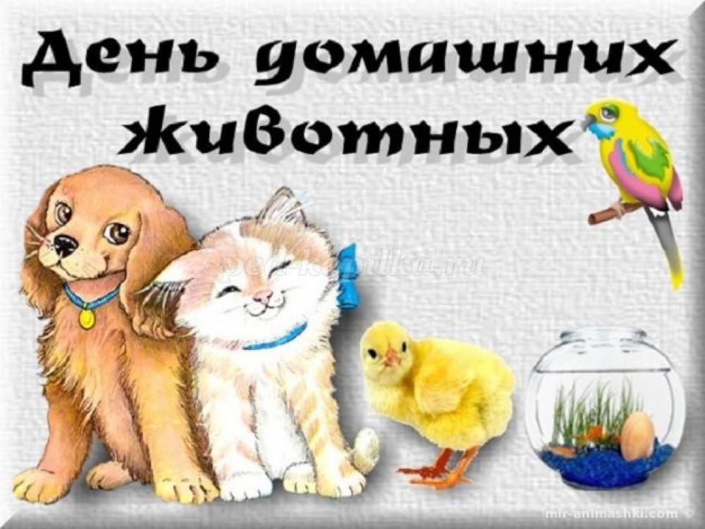30 ноября 2018 года — всемирный день домашних животных