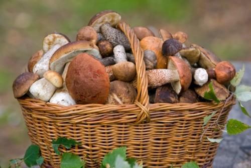 Маринованные грибы: 5 лучших рецептов