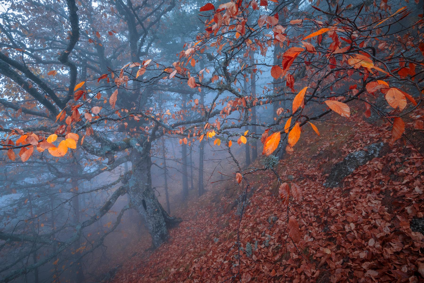 Хранитель леса.  Дубровинский Михаил
