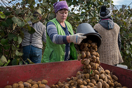 Правительство потратит 70 миллиардов рублей на сельское хозяйство