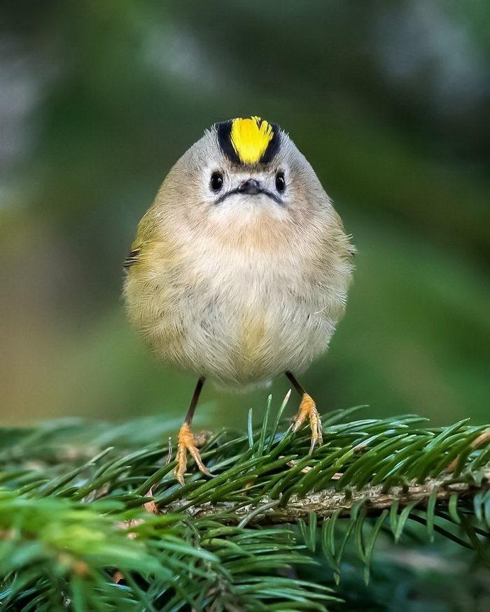 Angry Birds в реальной жизни на снимках Ossi Saarinen