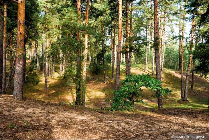 Настоящее чудо в лесах Подмосковья