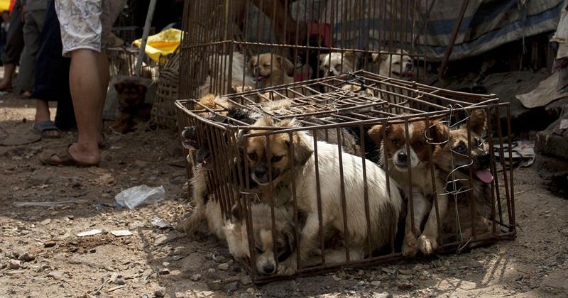 Китайцам наконец-то запретили есть собак