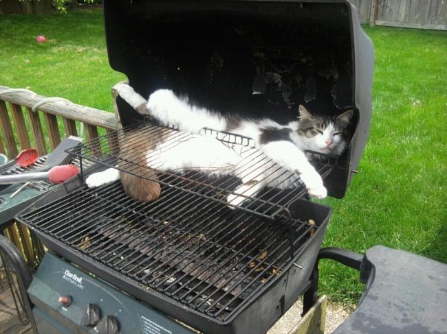 Коты, которые могут удобно устроиться в любом месте