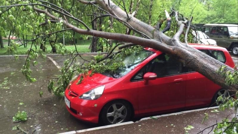 На машину из-за ветра упало дерево: что делать