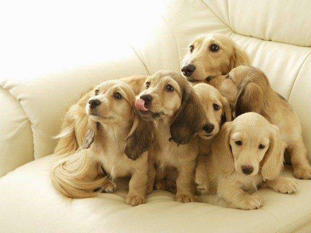Очаровательные собачки и их чудесное потомство