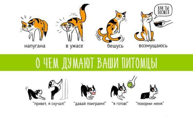 Настроение домашних животных в картинках
