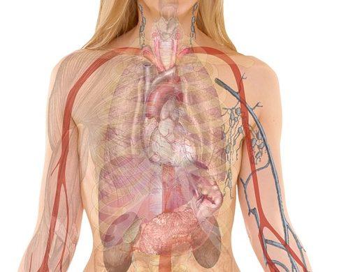 Куришь — восстанавливаешь легкие. В Израиле вырастили табак с генами человека для производства искусственных легких