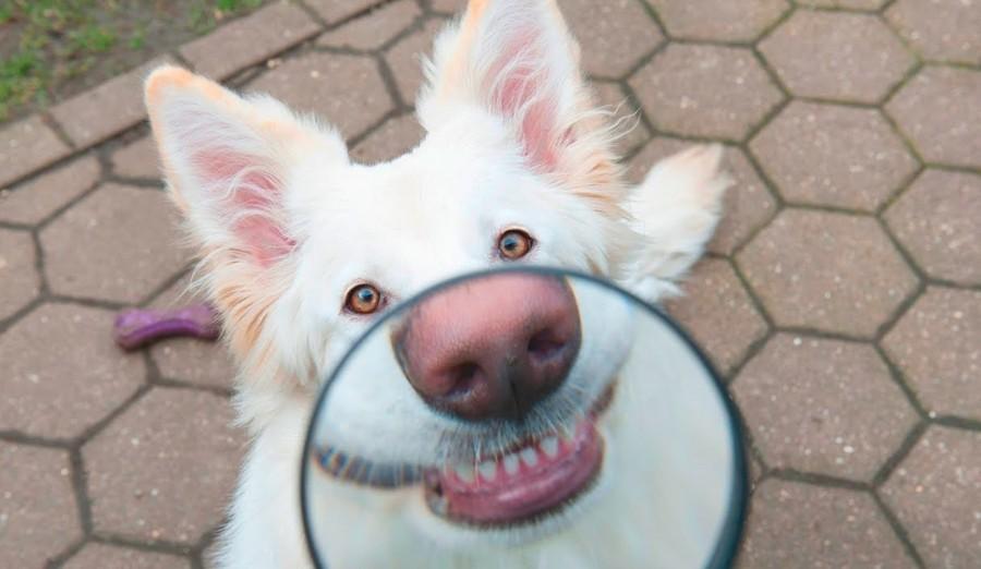 Защита собаки по полной, хотя похоже на какой-то BDSM !