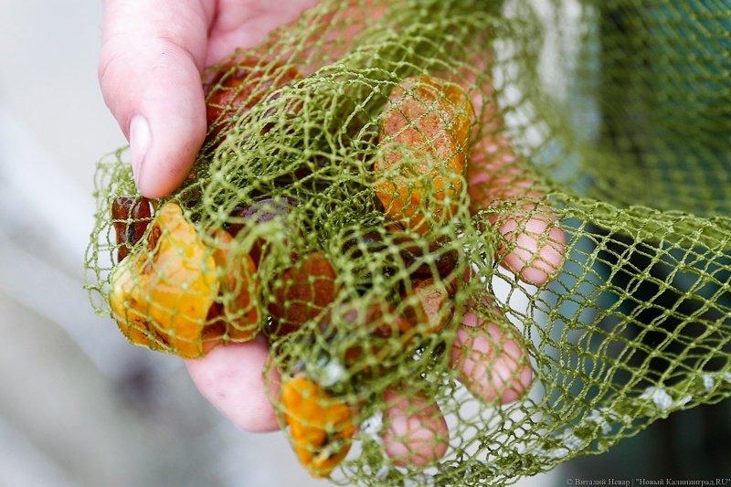 Как калининградцы на побережье ловят в сети янтарь