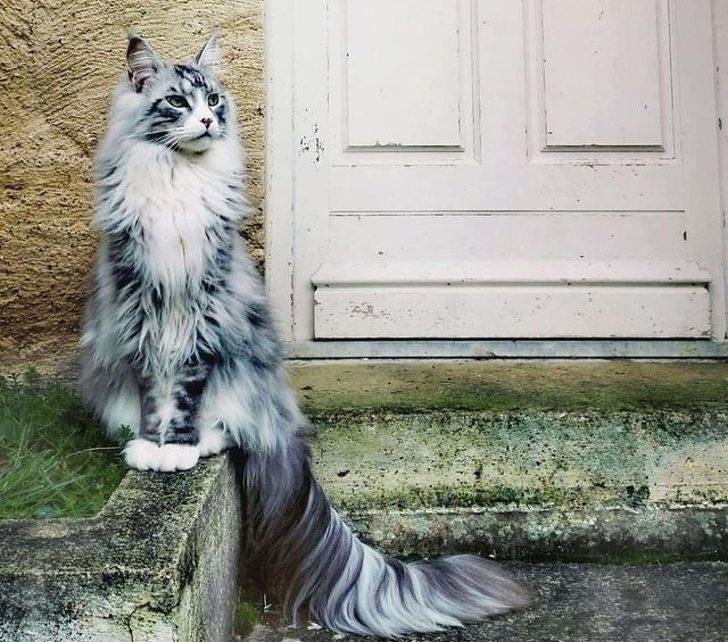 В каждой кошке живет гениальный актер