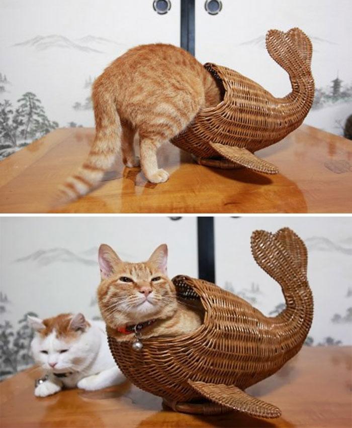 Кошки, которые любят сидеть в самых необычных местах