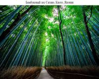19 волшебных лесов со всего мира, которые хотя бы раз нужно увидеть своими глазами