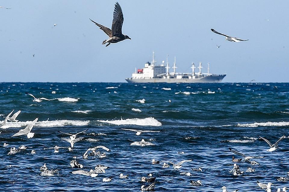 Генетический момент: профукали Крым, потеряют и Азовское море