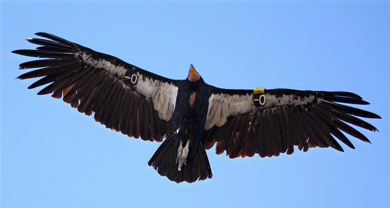 Прекрасные и опасные. 25 хищных птиц ч.2