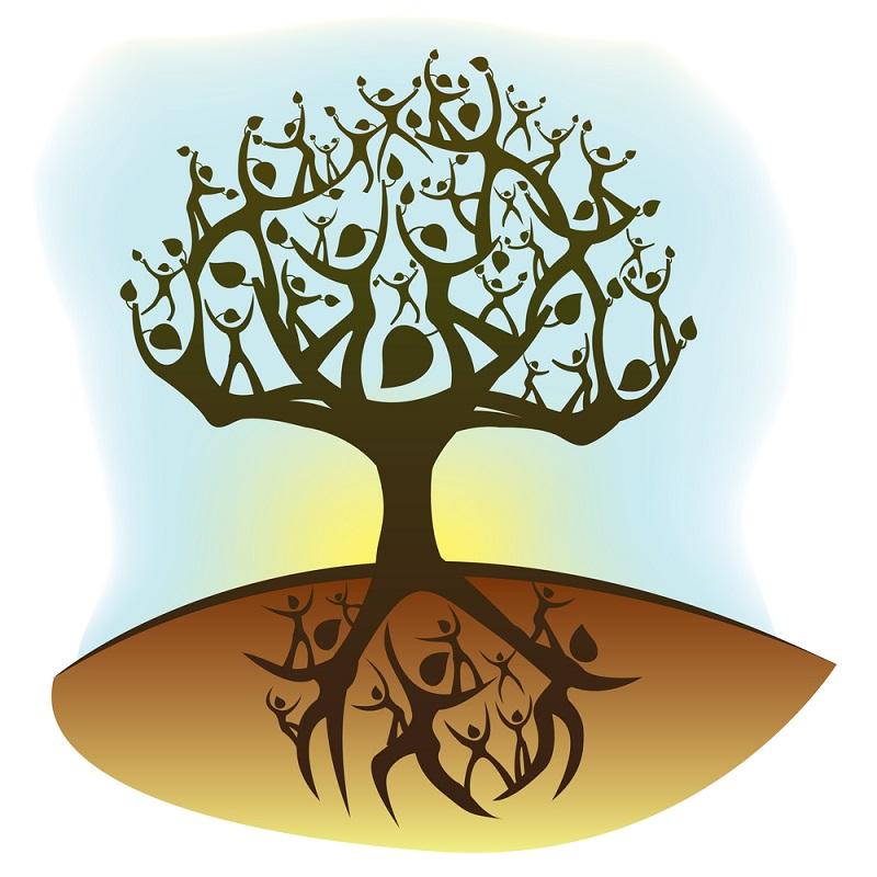 родовое дерево в школу