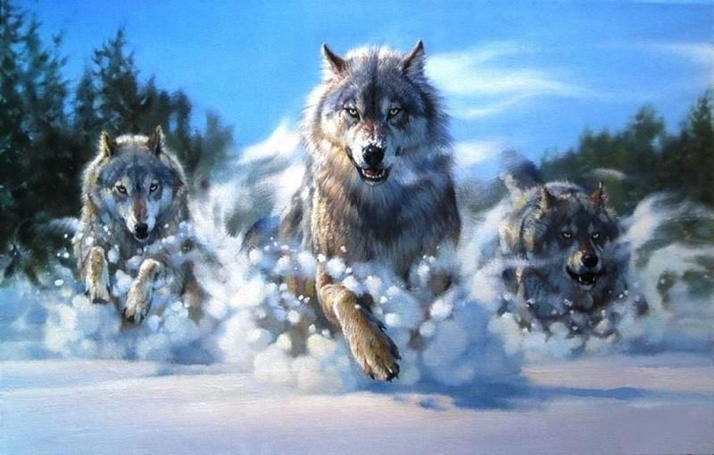 Волчатники
