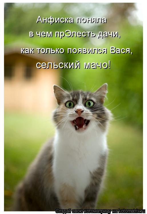 Котоматрица: Анфиска поняла  в чем прЭлесть дачи, сельский мачо! как только появился Вася,