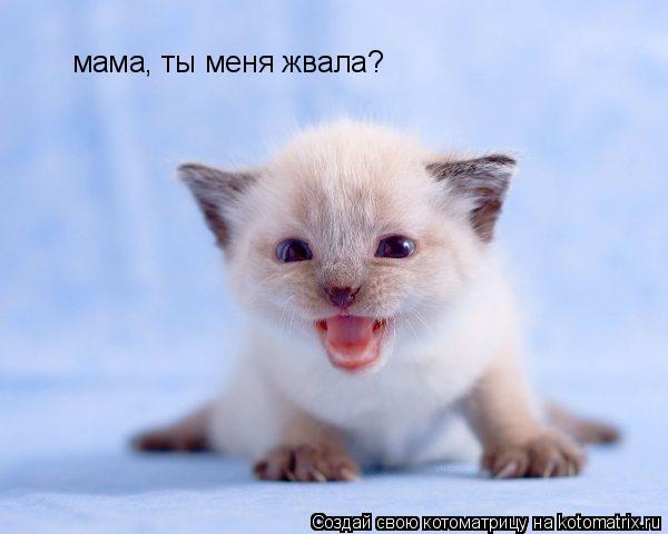 Мама, ты меня звала?!