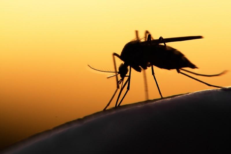 8 полезных растений, которые отгонят комаров от твоего участка