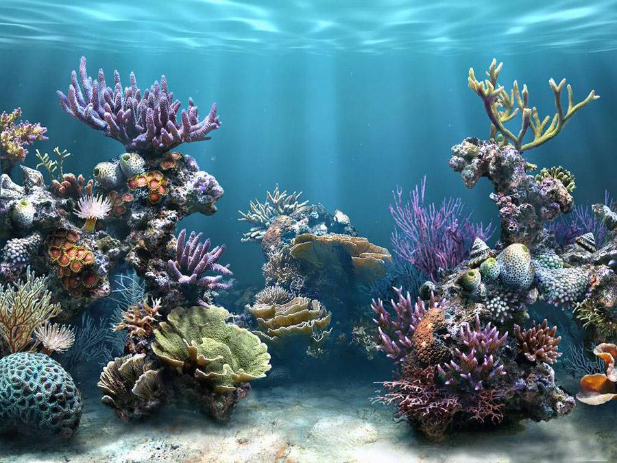 Подводный мир и обитатели морского дна. Фото.