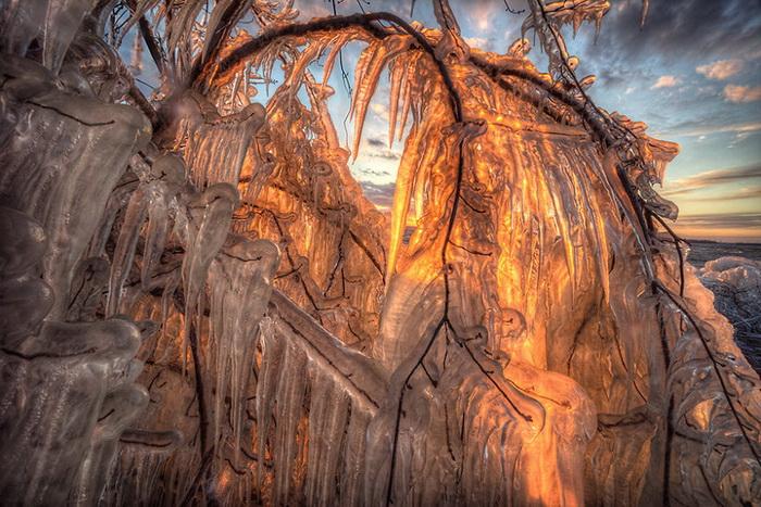 Ледяные деревья и ледяное море