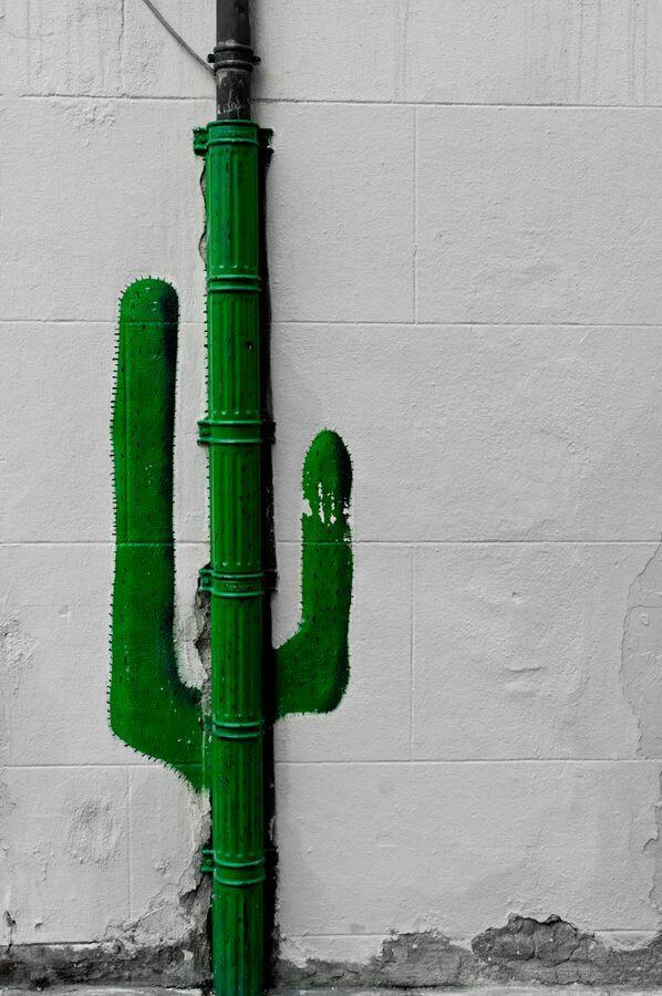 Настенный кактус