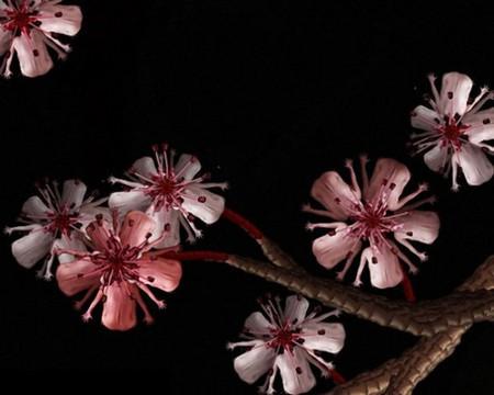 Сесилия Уэббер: Люди – это цветы! — фото 9