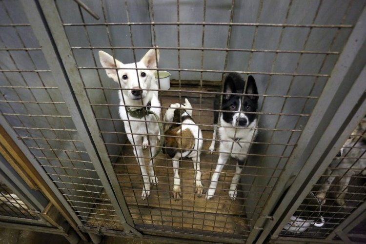 Неагрессивных собак будут отпускать из приютов в Петербурге