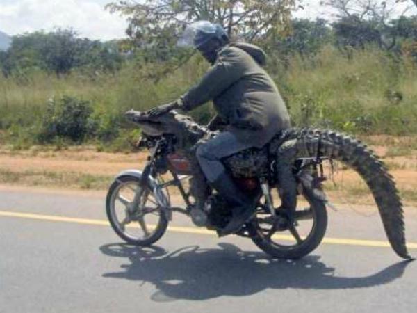 Безумная Африка: 13 вещей, которые могут произойти только здесь