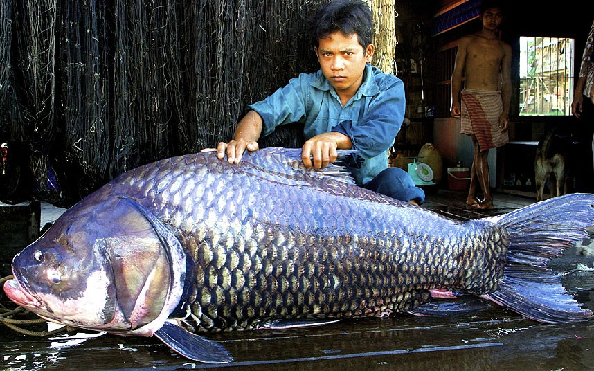 гиганты из мира природы 12 На снимках: гиганты из мира природы   самые крупные животные в мире!