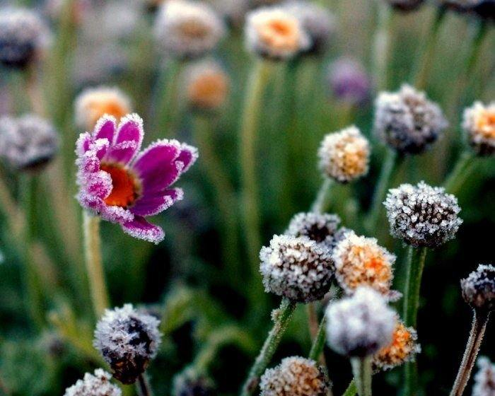 Лед и цветы