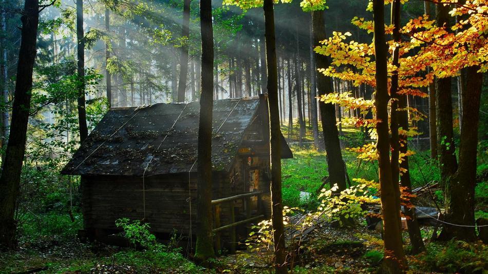 houseinwood02 Самые красивые дома в лесу