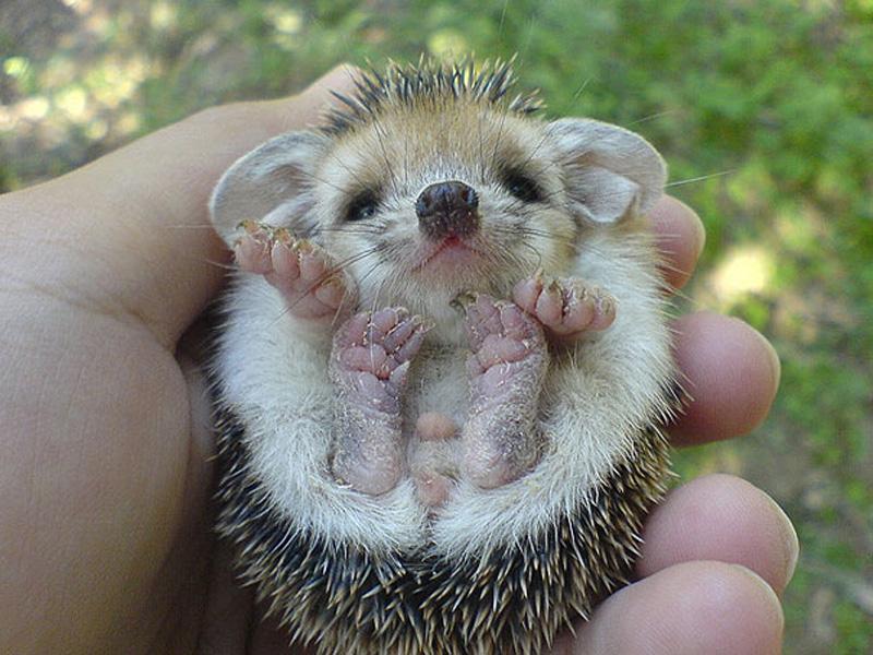 Детеныши животных милые и нежные