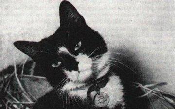 Инцидент на Янцзы: как обычный кот Саймон стал легендой