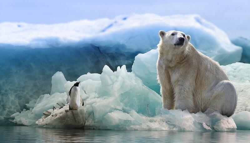 Почему белые медведи не мерзнут? излучение, медведь, мороз, почемучка, тепло, холод