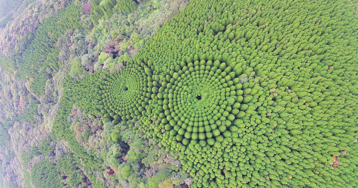 50-Year-Long Japanese Experiment Creates Magical 'Crop Circles' Out Of Trees