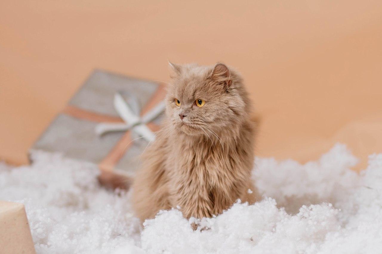 Екатеринбург!!!! Эта кошечка имеет самое прямое отношение к А.С. Пушкину и она ищет дом. Зовут Пуша) Хотите узнать ее историю?