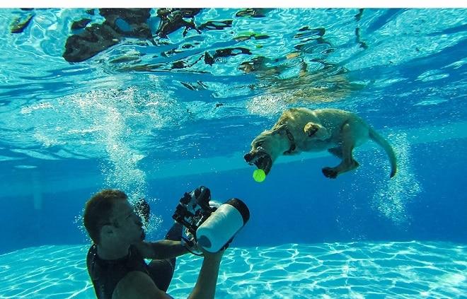 Питомцы под водой: 10 забавных собачек, которые нырнули и попали в объектив фотоаппарата