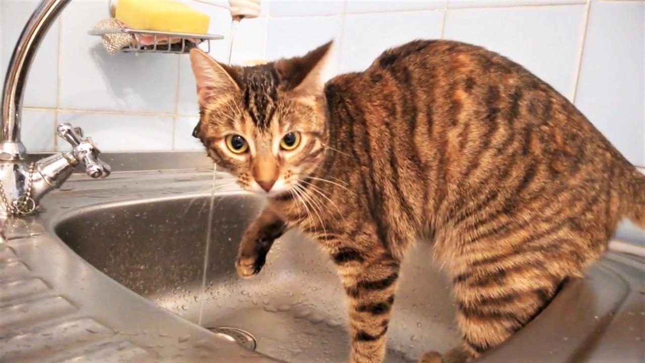 Коты кошки и воды немножко